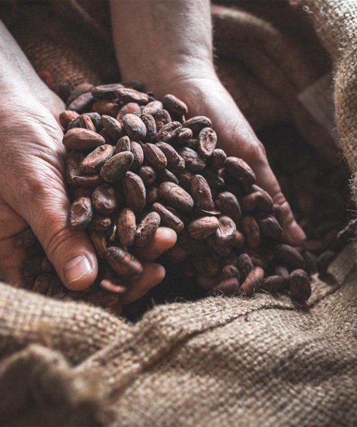 cacaomada